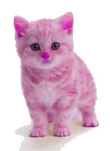 EVERYTHING PINK - Bing Images. Yes Robin I really do need a PINK kitten!