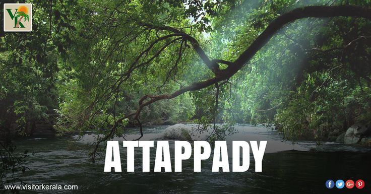 Attappady-Visitor Kerala Tourism Portal Attapady is situated on the north-eastern side of Palakkad district. Attappady is one of the largest tribal settlements in the state.