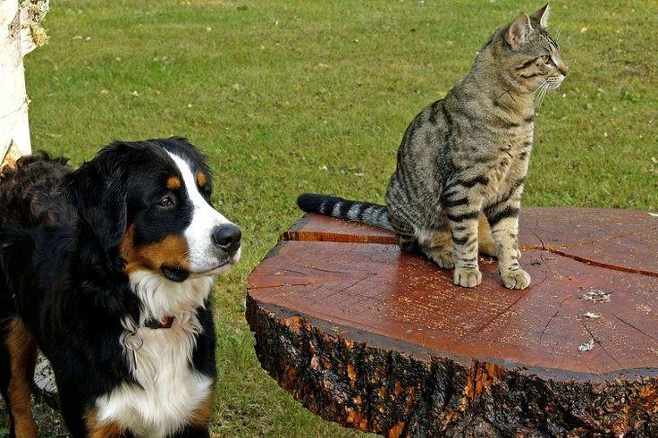 Cicásak vagytok vagy kutyásak? - http://kicsibudoar.hu/cicasak-vagytok-vagy-kutyasak/