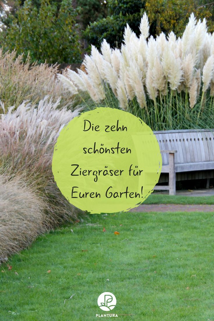 Ornamental Grasses Our Top 10 For Your Garden Mit Bildern Garten Pflanzen Ziergras Garten Bepflanzen