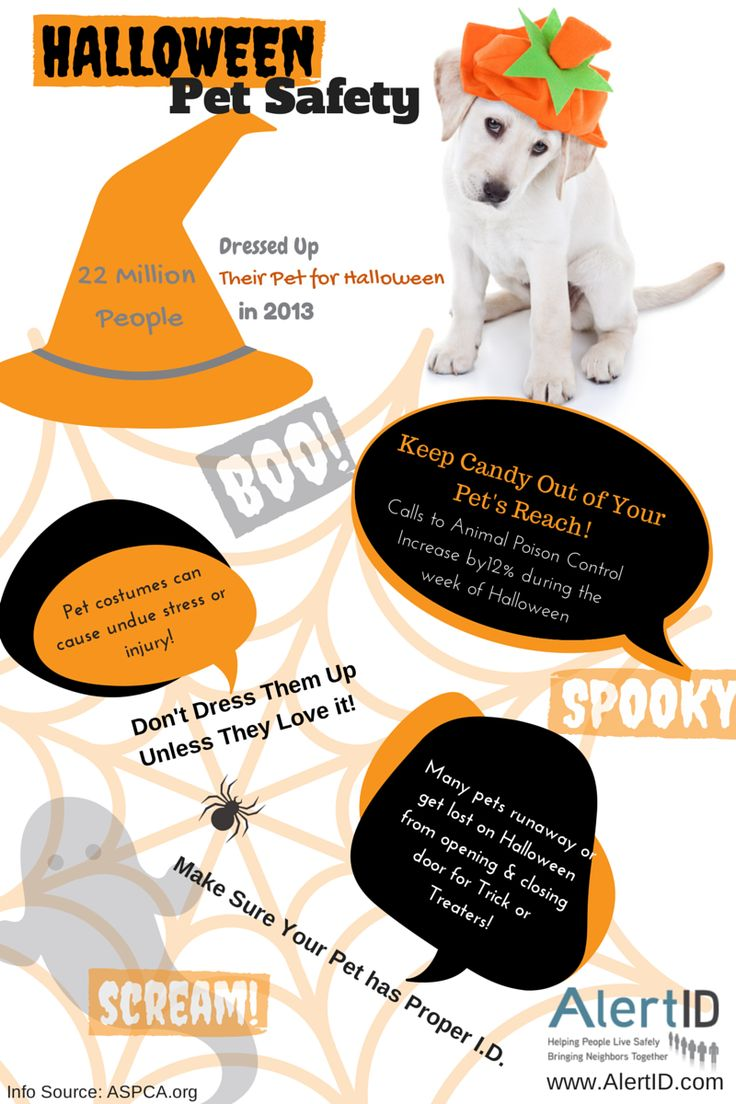 Keep your pet safe not spooked this Halloween! Pet safe