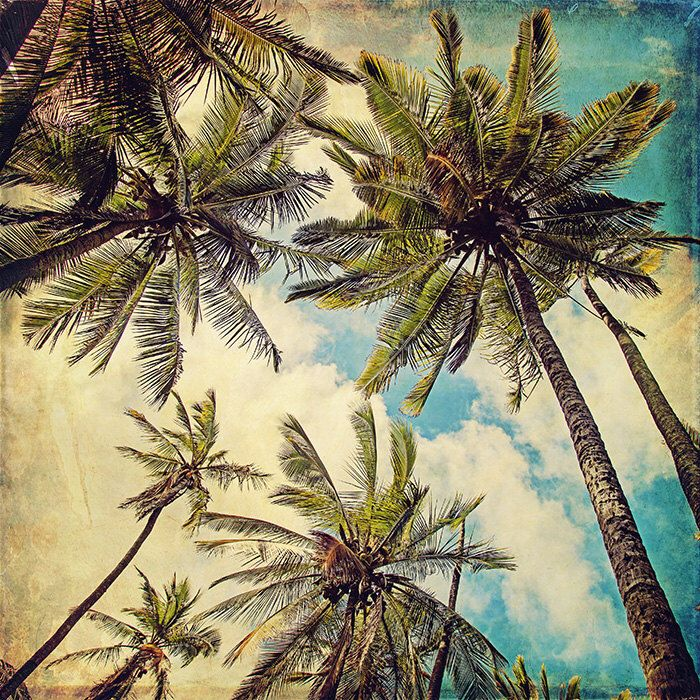Palm Tree Beach Decor, Kauai Art Print, Vintage Hawaii, Kauai Island Photography, Blue Hawaii, Teal, Summer Photograph - Kauai Island Palms by NostalgiqueImages on Etsy https://www.etsy.com/listing/196851715/palm-tree-beach-decor-kauai-art-print