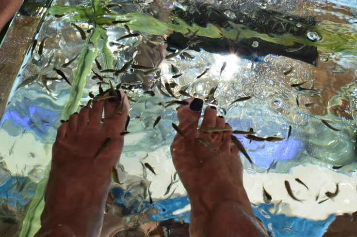 Best 25 fish pedicure ideas on pinterest korea cafe for Fish pedicure dc