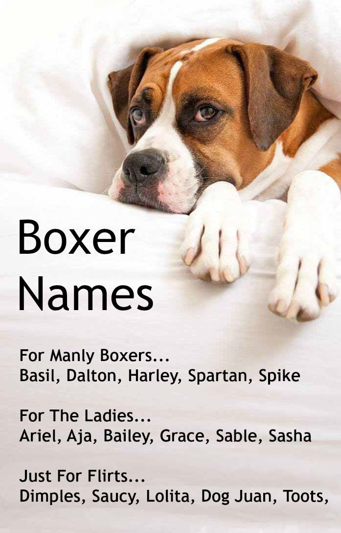 A few unique Boxer dog names, find more for just this breed... http://www.dog-names-and-more.com/Boxer-Dog-Names.html