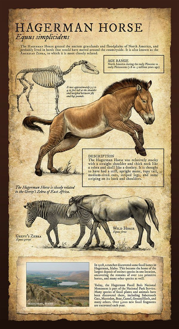 Hagerman Horse | Natural History Museum Signage | Courtesy of artist Beth Zaiken (linked)  Pin brought to you by: https://CoolScienceArt.com