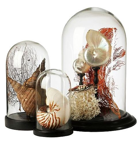 Seashells under glass cloches.