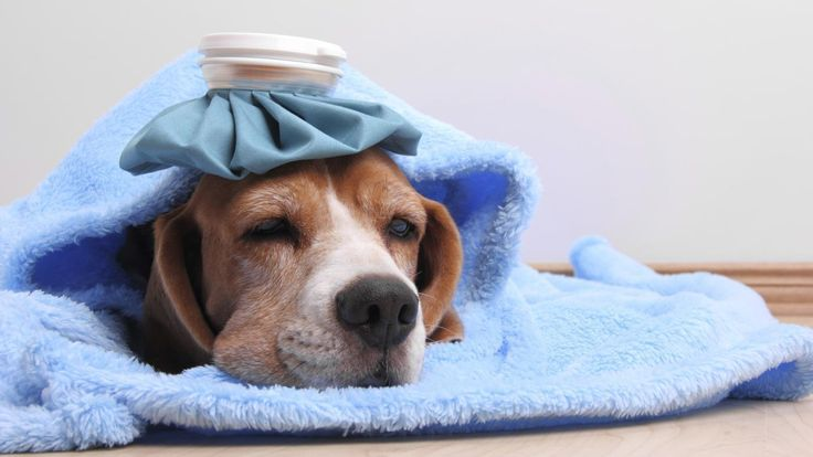 It's upsetting to know your furry family member is in pain. At ABC Compounding Pharmacy near Studio City, we provide compounded veterinary medications.
