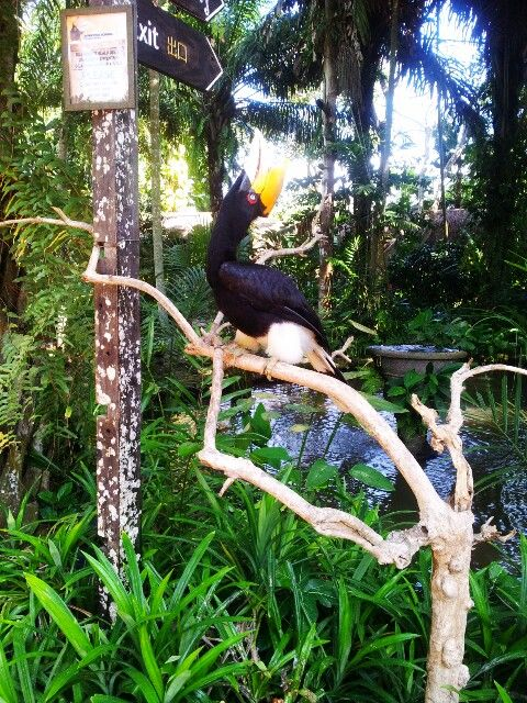 Hornbill Bird in Bali Zoo Gianyar,Bali,Indonesia
