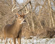 62 Deer hunting tips for a successful season                              …