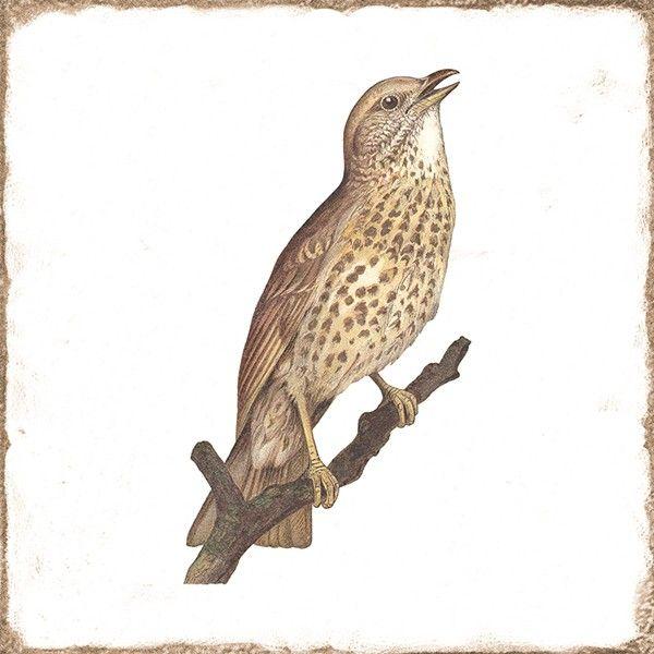 Kolekcja Forli - płytki ścienne Forli Birds Decor Mix 20x20