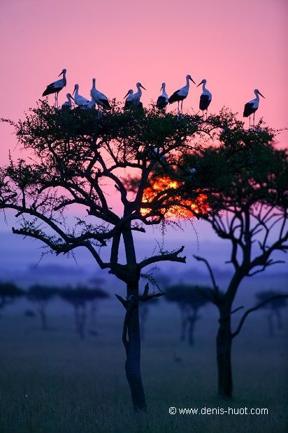 African Sunrise. 'I never knew of a morning in Africa when I woke that I was not happy.' __Ernest Hemingway