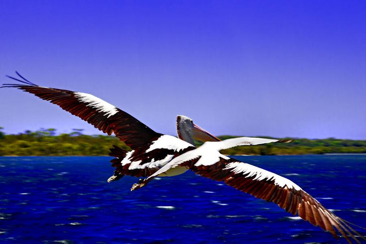 Wing Span Of Pelican And Seagull