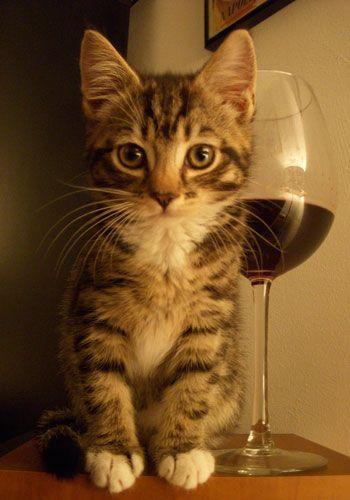 Stylist's Cute Pet Contest: Biba