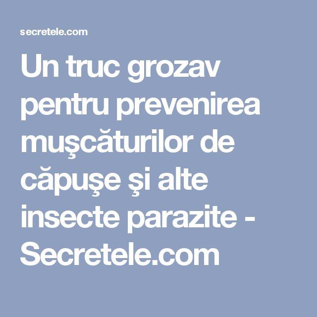 Un truc grozav pentru prevenirea muşcăturilor de căpuşe şi alte insecte parazite - Secretele.com