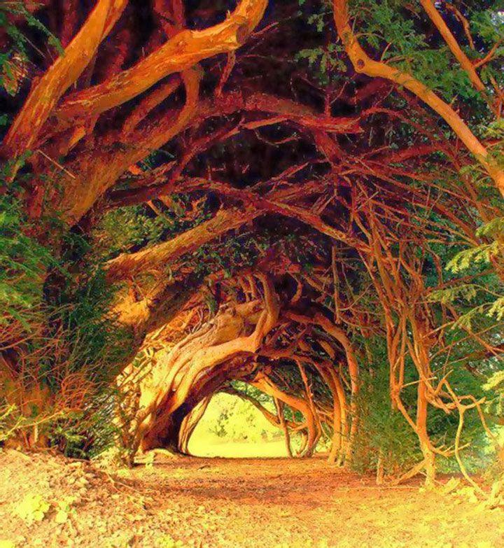 If millénaire, Llangernyw, Pays de Galles