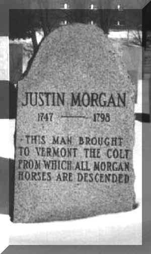 """The Morgan horse breed was started with a small bay colt named """"Figure"""", who was owned by Justin Morgan, a music teacher in Vermont. He was sold several times over the years with most owners using him as a breeder. Figure finished his life out to pasture at the age of 32. A true American horse breed."""
