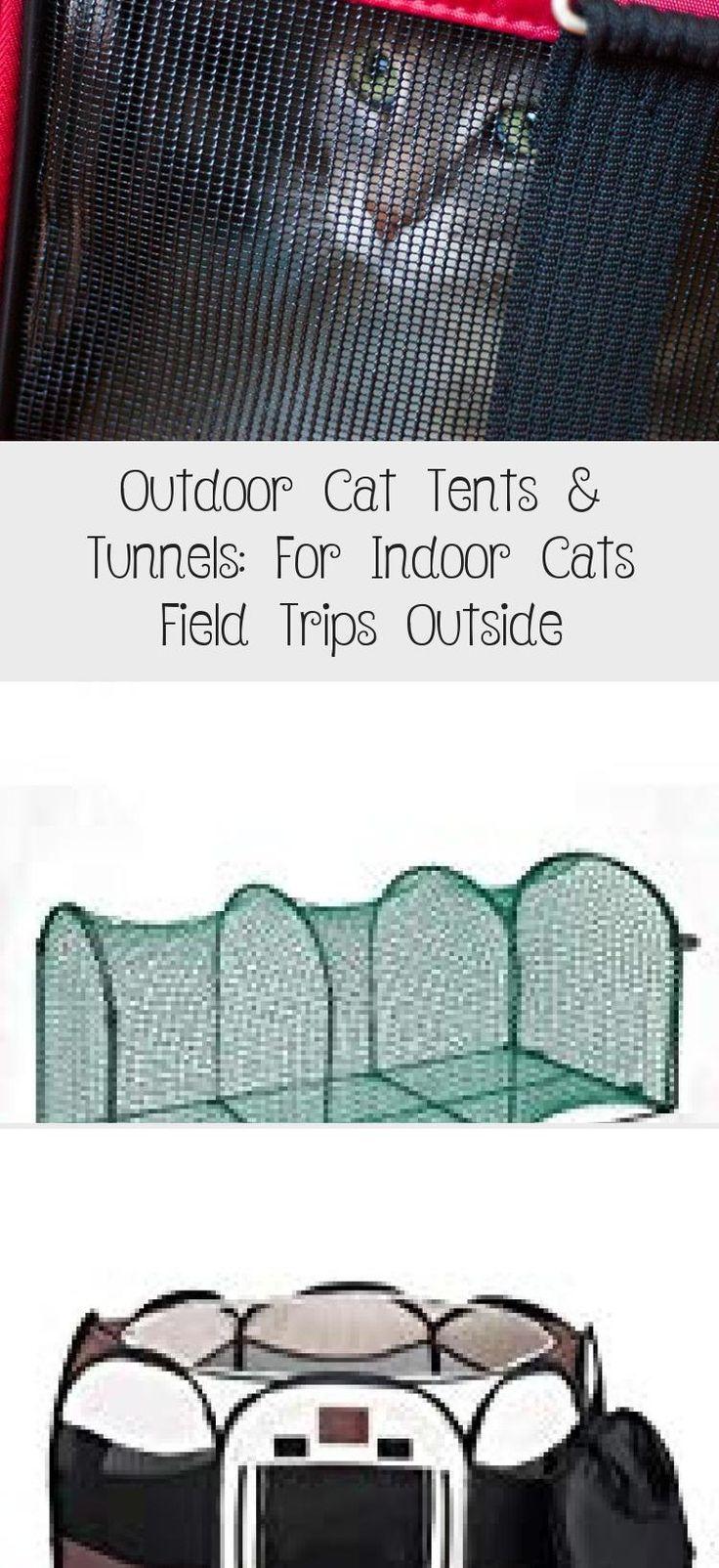 My Blog En Blog in 2020 Cat tent, Outdoor cats, Indoor cat