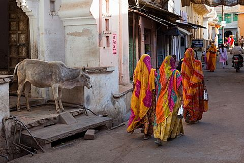 Ladies in traditional dress walking past a cow on the street in Deogarh, Rajasthan, India, Asia