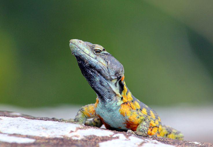 New Design - Lizard