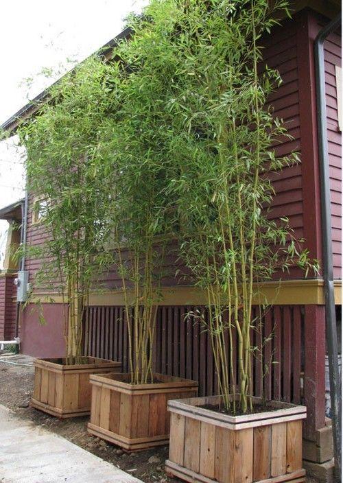 Luxury bambus garten selber machen wachsen pflanzenk bel holz Mehr