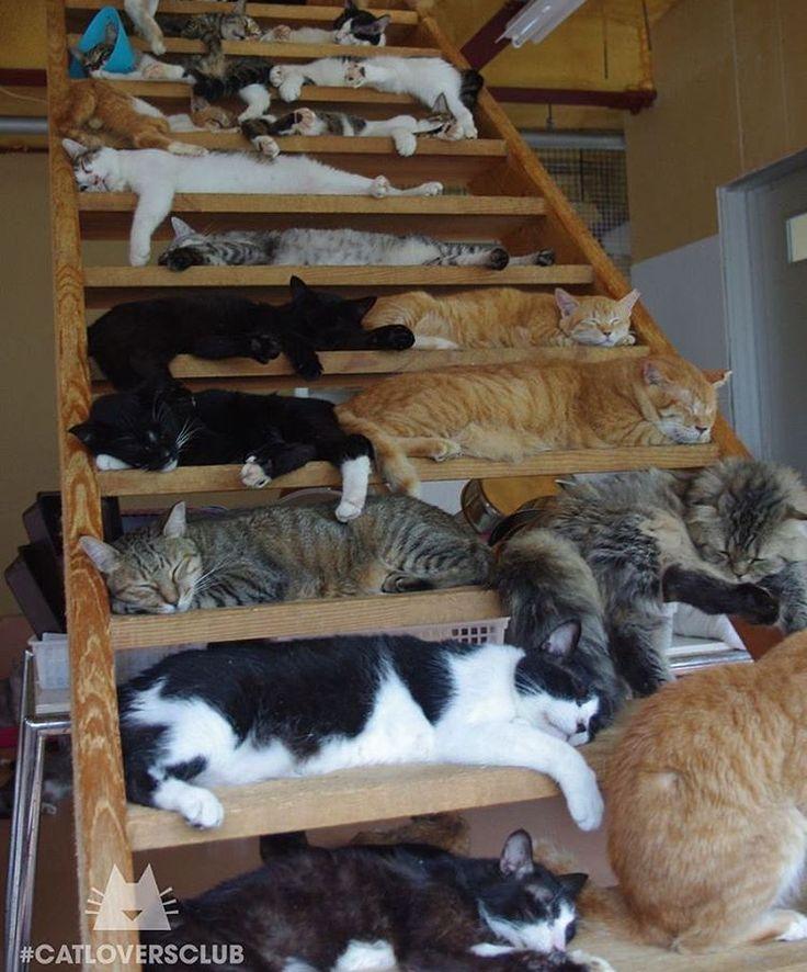 Des étagères à chats...