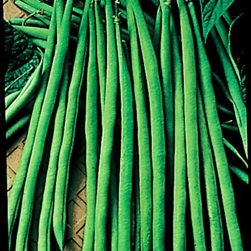Maxibel Bean Seeds Warm Colors And Restaurant 640 x 480
