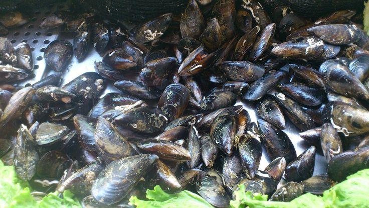 Foto gemaakt door: Wim Dorsman  Vandaag visdag...paling,makreel en mosselen...want Mosselen kunnen altijd!