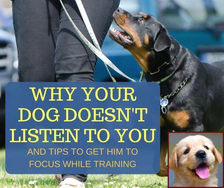 Dog Behavior Nipping At Heels And Ask A Dog Behaviorist Dog