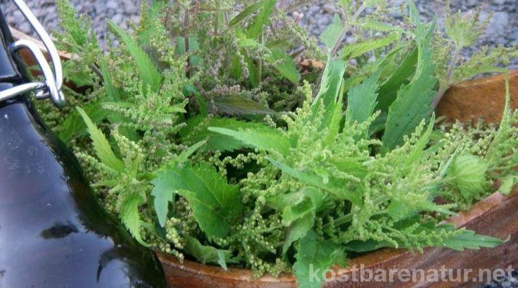 Auch wenn die Blüten der Brennnessel unscheinbar sind, können sie deiner Gesundheit gute Dienste leisten. Hier ein Rezept für Sirup mit den feinen Blüten!