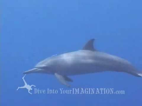 Dolphin education video for kids. Apologia Swimming Creatures science activity.  http://shop.apologia.com/64-zoology-2