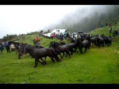 Transhumance en Bethmale Ariège Pyrénées vidéo 2010. - YouTube