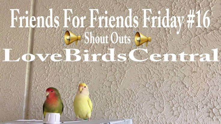 Friends For Friends Friday #16   Shout Outs   LoveBirdsCentral #161