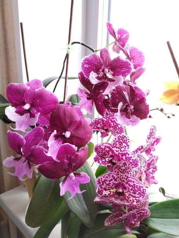 Пин на доске Цветы, уход, выращивание, красота в доме и на ...