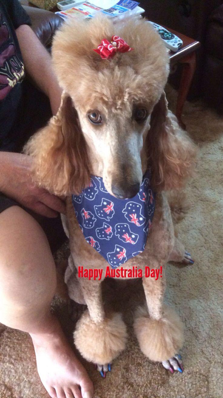 Australia Day 2014. #AustraliaDayOnboard