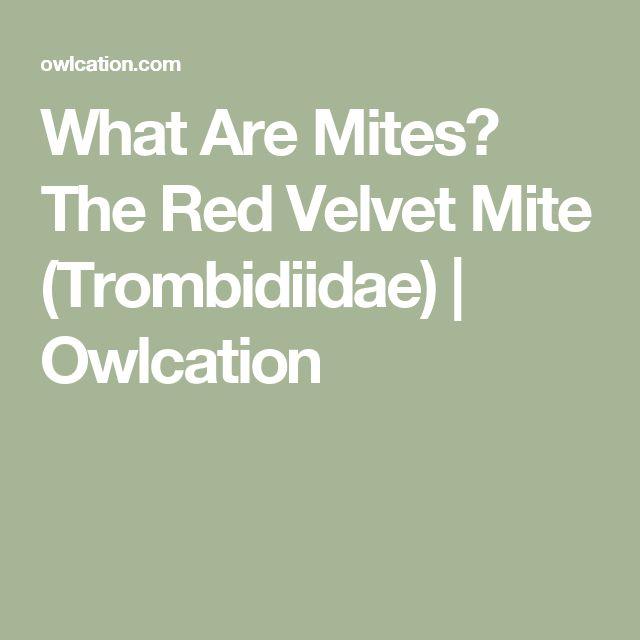 What Are Mites? The Red Velvet Mite (Trombidiidae) | Owlcation