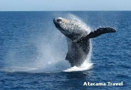 balena - Baja California, Atacama Travel