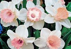 Deer-Resistant Flower Bulbs & Perennials For Sale | Buy Deer Resistant Bulbs & Perennials At Eden Brothers