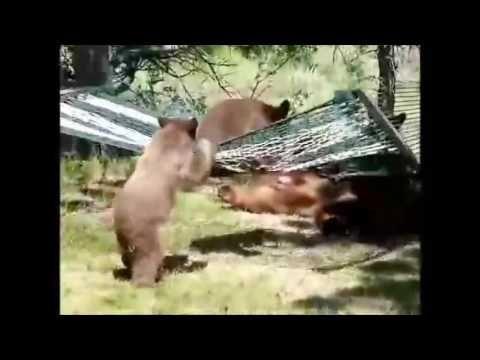 Три #медведя - как в нашей сказке! Three #bears - as in our tale!