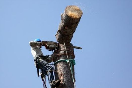 Action Tree Pros - Tree Service & Tree Removal in Henderson KY