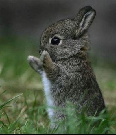 If your happy and you know it clap your paws. Or it could just be a T-rex bunny!