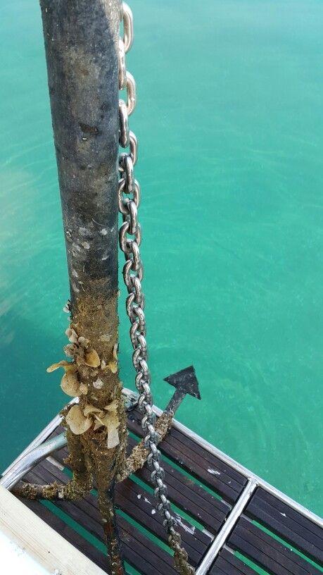 Batık çapanın denizden çıkma hali