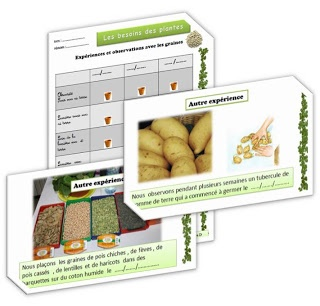 Fichier sciences: la germination.
