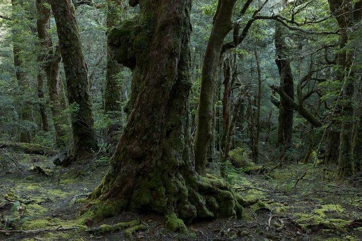 Temperate Rainforest, Tasmania by Markus Mauthe, via 500px