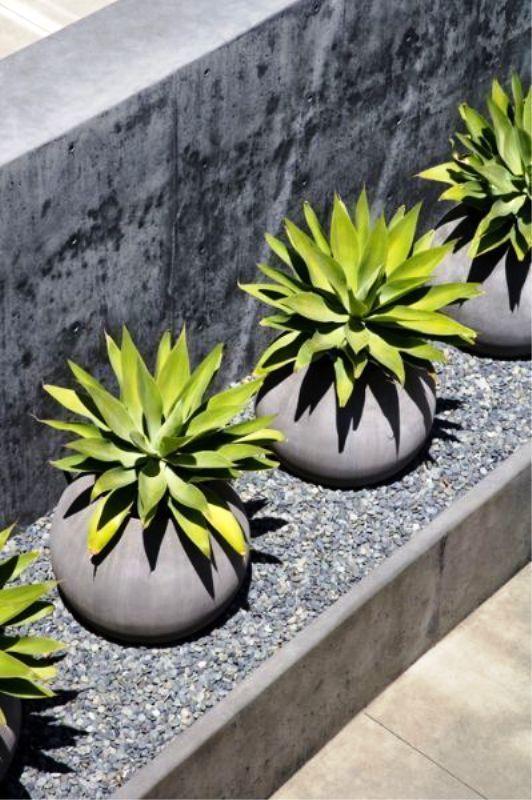 #pots#plants#garden#