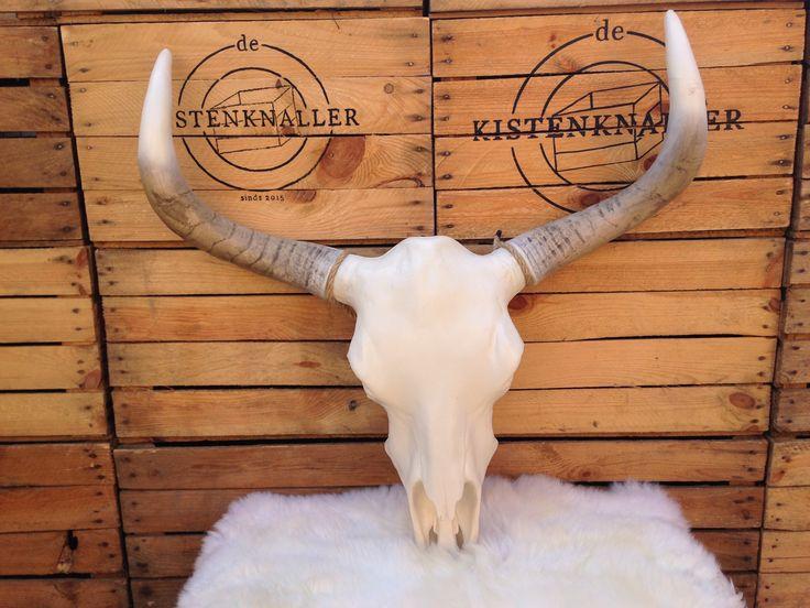 25 beste idee n over hoorns op pinterest kunst for Schedel hoorns