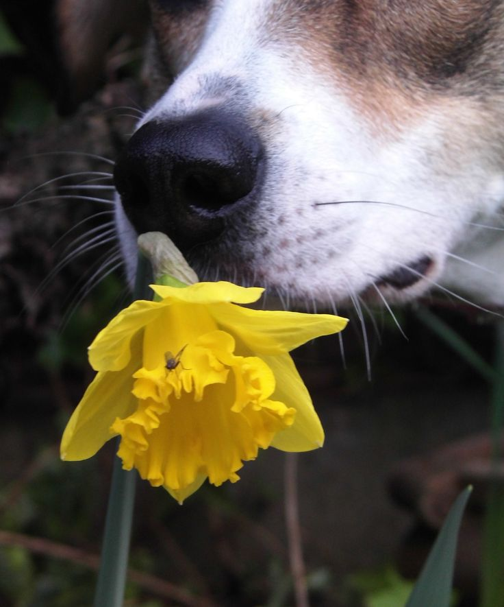 Daffodil, Fly and oh yes our Dog!