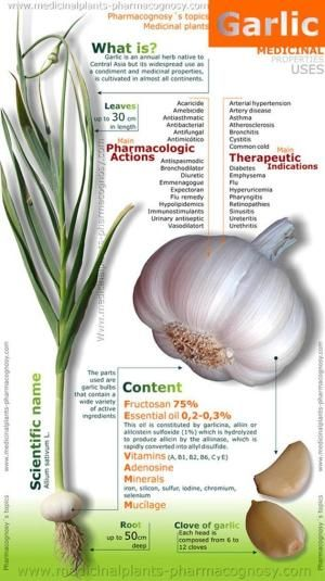 The Health Benefits of Garlic for Cholesterol Levels, for Cancer ,for Infections ,for  Pre-eclampsia  Nutrients in Garlic  Garlic is a fantastic source of vitamin B6, as well as a very good source of selenium, manganese and vitamin C. It's also a good source of calcium, phosphorus, iron, potassium and copper.  Plus History of Garlic….. by proteamundiJenni Pfeiffer