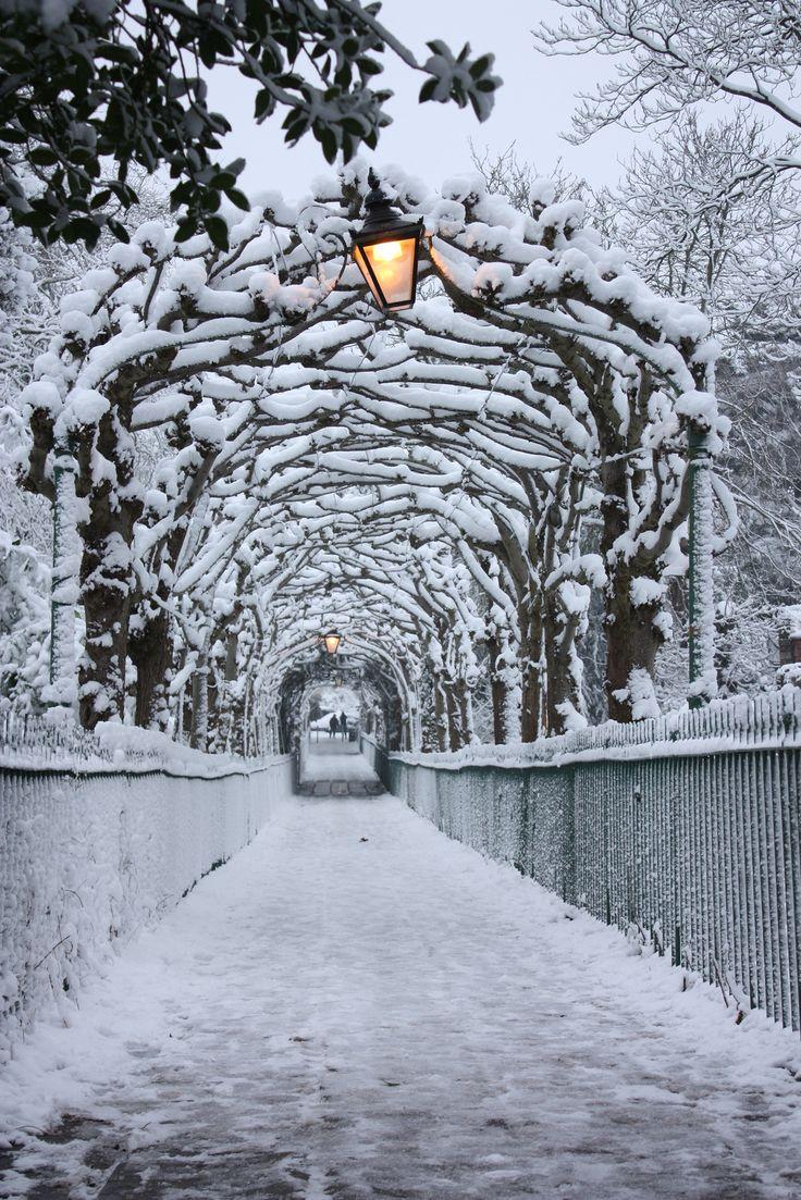 .~birdcage walk in snow~.