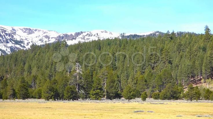 Forest Meadow, Snowy Mountains, Blue Sky - Stock Footage | by Iam2012escapee
