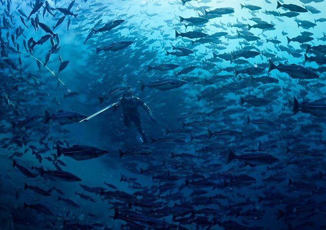 @simenwilberg spearfishing in Norwegian Fjords #dykking #freediving #diving #fridykking #underwaterphotography  #frivannsliv #em5mkll #olympus #underwater #olympuscamera #olympusunderwater #freedivephotography @olympusnorge #olympusnorge #adventure #olympusfreediving #naturephotography  #fishing #spearfishing #spearo #fjords #norwegianfjords #norway #fjordnorway #møre #visitnorway #freedivingart @simenwilberg @hamamar @jrwolfftreni @roooys91 @frivannsliv